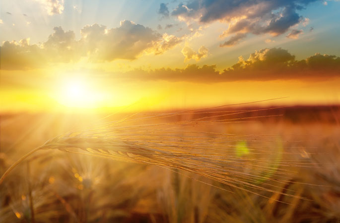 "Quelle: Fotolia, Mykola Mazuryk, ""golden sunset over field with barley"", 40756645"