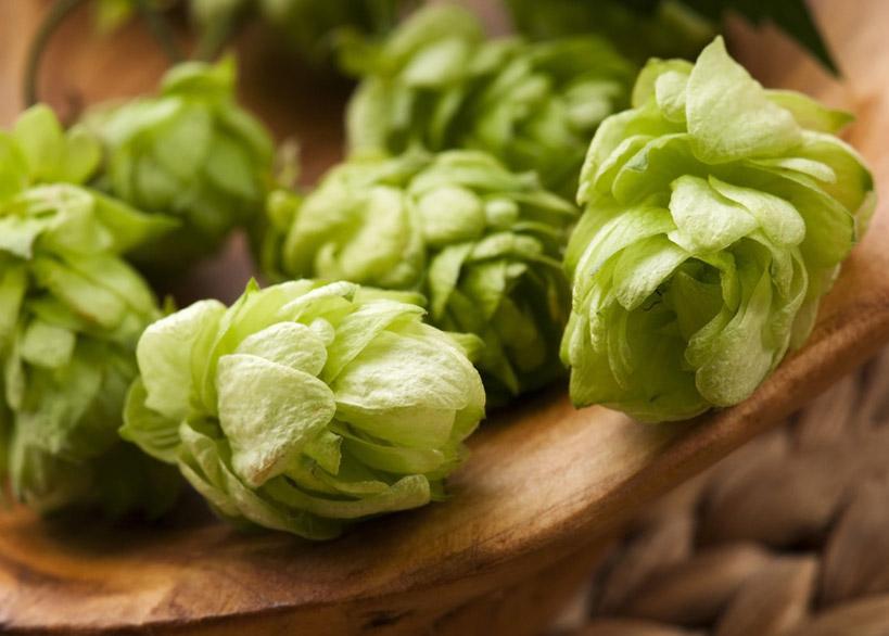 "Quelle: Fotolia, joanna wnuk, ""Hop cone and leaves"", 40590322"